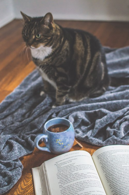 tabby cat with blanket and book and tea