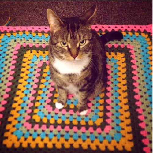 tabby cat on crochet blanket